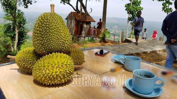 Bulan Maret Cocok Untuk Berburu Durian di Kabupaten Trenggalek, Ada Durian Khas Lokal yang Legit