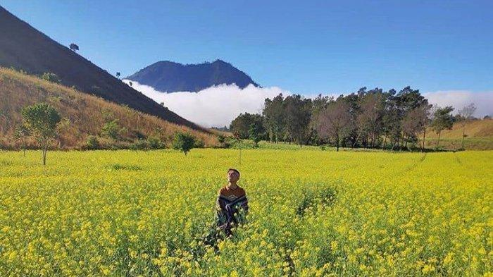Viral Pemandangan Kebun Sawi Jampit Bondowoso, Disebut Mirip Jeju Island