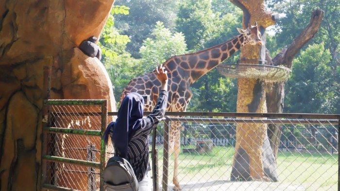 Kebun Binatang Surabaya Kembali Buka, Berlakukan Kuota Pengunjung dan Tiket Online