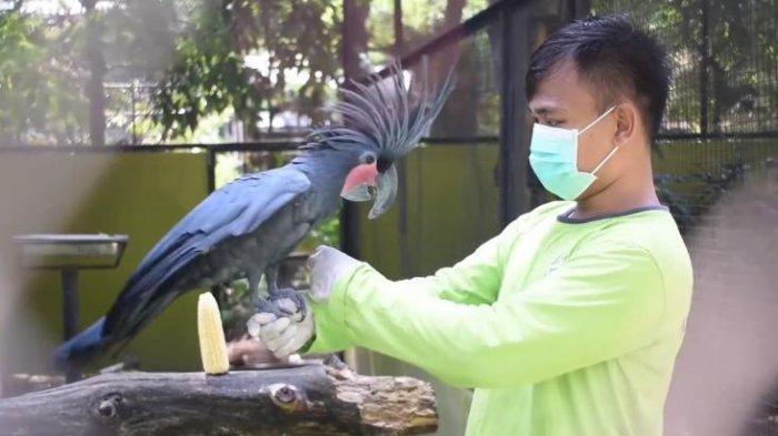 Kebun Binatang Surabaya Buka Kunjungan Dua Sesi Perhari, Pengunjung Harus Beli Tiket Online