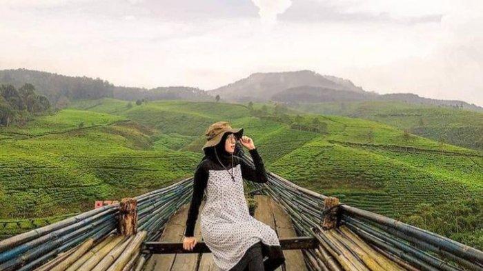 Wisata Perkebunan Teh Kertowono di Guci Alit Lumajang, Pemandangan Lereng Gunung Semeru