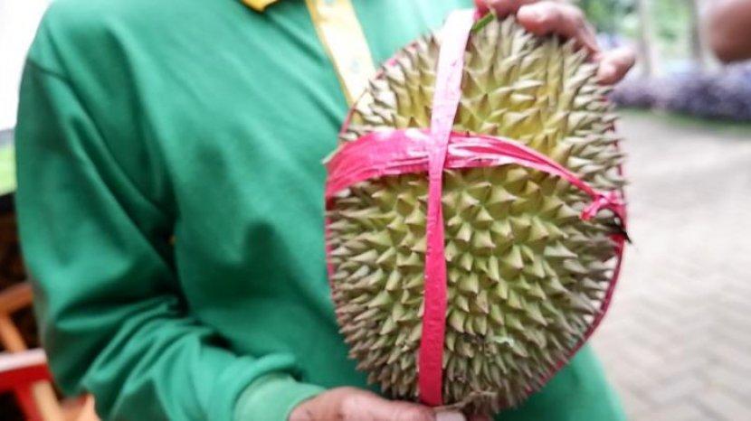 Istimewanya Durian Bido dari Wonosalam, Si Legit yang Mulai Sulit Dicari