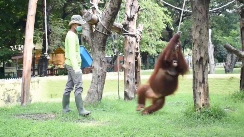 Libur Lebaran, Pengunjung Kebun Binatang Surabaya Tembus 17 Ribu Orang