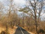 akses-masuk-taman-nasional-baluran-menuju-savana-bekol.jpg