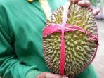 durian-bido-wonosalam.jpg