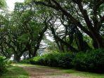 hutan-de-djawatan-banyuwangi.jpg
