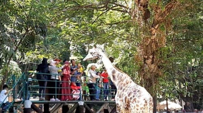 Libur Lebaran di Kebun Binatang Surabaya, Bisa Beri Makan Satwa Secara Langsung
