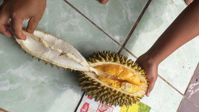 Ini Dia Kencono Rukmi, Buah Khas Gunungkidul yang Serupa Durian