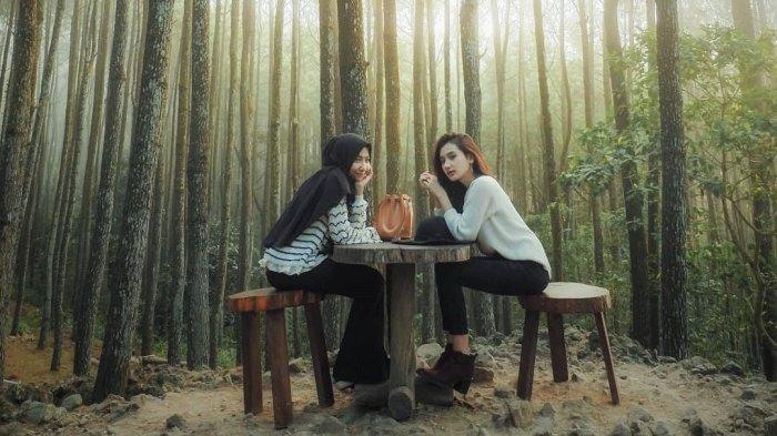 Hutan Pinus Mangunan | Lokasi, Tips, Harga Tiket Masuk dan Wisata Alternatif Sekitar