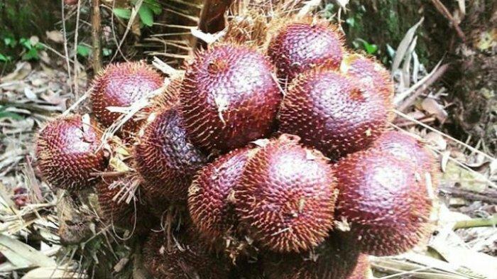 Kecamatan Turi, Penghasil Salak Terbesar di Sleman