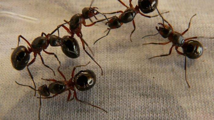 Lindungi Tanaman dari Semut dengan Menggunakan Pestisida Alami Buatan Sendiri