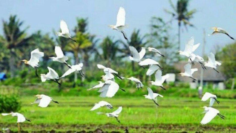 Luas Panen Padi tahun 2020 Turun jadi 110,55 ribu Hektare