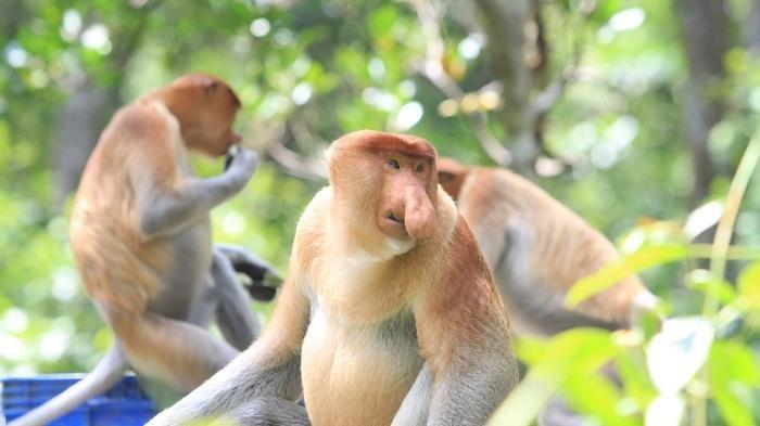 6 Rekomendasi Objek Wisata Populer di Kota Tarakan