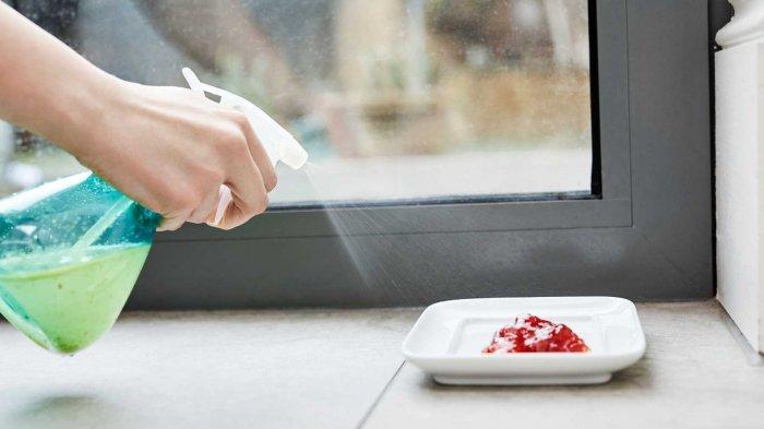 8 Cara Mengusir Semut dari Rumah