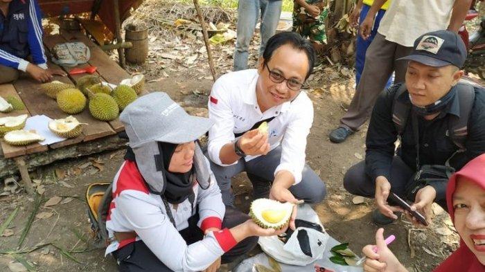 Berasal dari Pohon Berusia 1 Abad, Durian Kunyit dari Kalimantan Jadi Juara