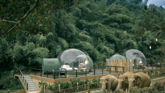 Menginap di Kamar Transparan, Bisa Sambil Lihat Gajah Berkeliaran