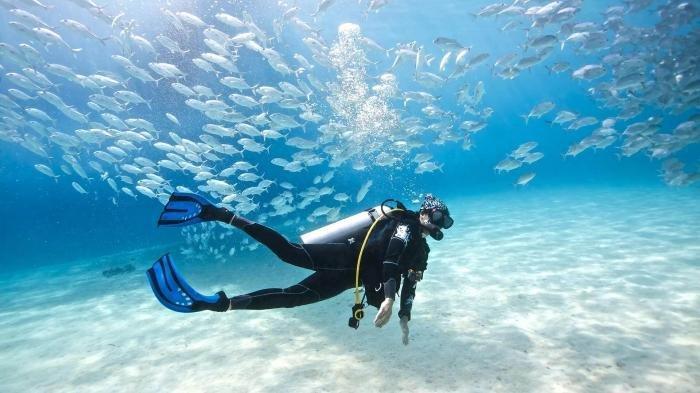 18 Tips Menyelam untuk Pemula, Pastikan Memilih Dive Center Profesional