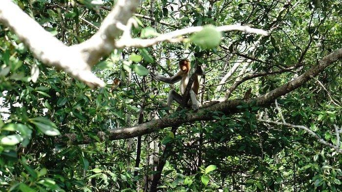 Menyusuri Hutan Mangrove Center Graha Indah di Balikpapan