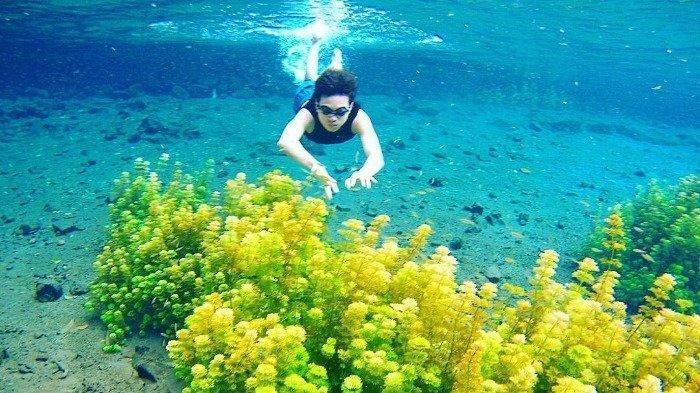 Tempat Renang Asyik Sambil Lihat Ganggang Hijau dan Ikan Kecil di Sumber Sirah