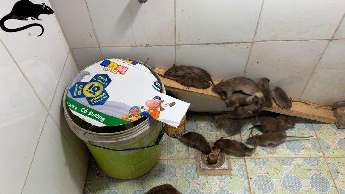 Tips Membuat Perangkap Tikus Sendiri