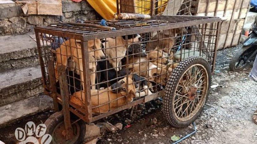 Realita Mengerikan Pasar Daging Anjing & Kucing di Indonesia