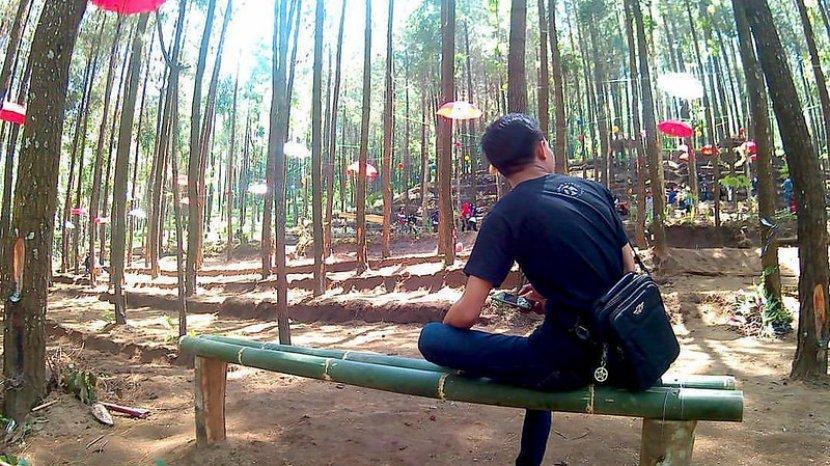 Hutan Pinus Semeru, Objek Wisata Baru di Malang untuk Nikmati Liburan Akhir Pekan