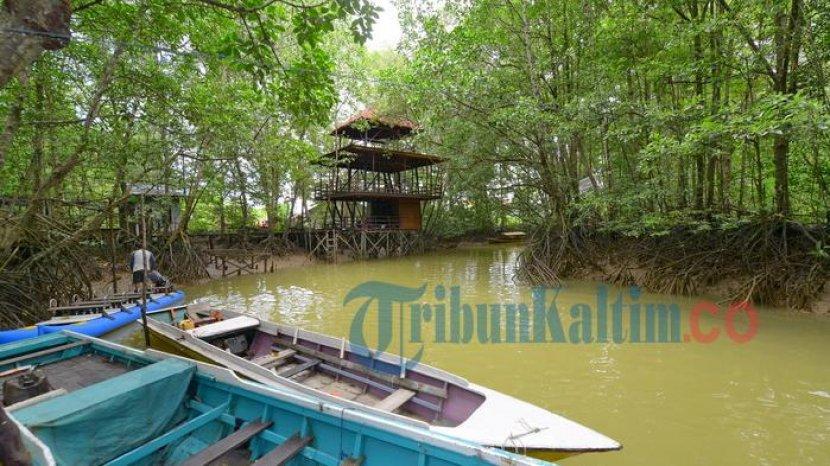 Besok Libur, Belum Ada Agenda Liburan? Ini 3 Rekomendasi Wisata Alam Mangrove di Balikpapan