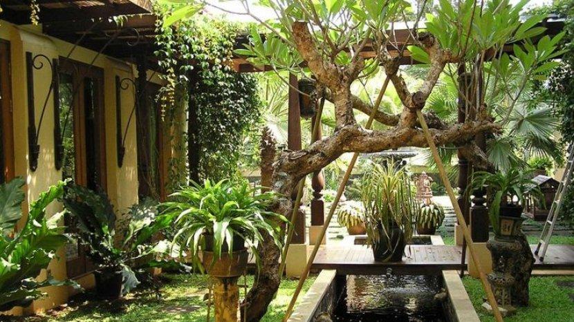 Menanam Pohon di Rumah Juga Bisa Menghemat Listrik