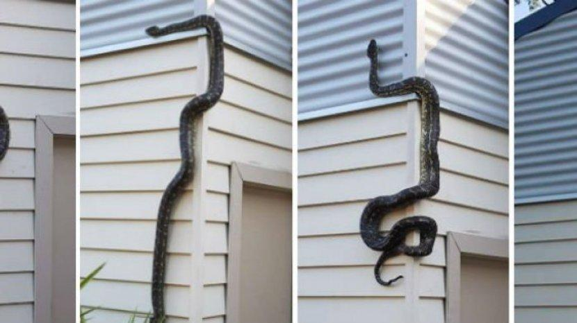 Cara Mudah Mencegah Ular Masuk ke Dalam Rumah