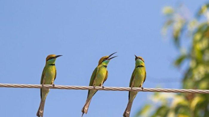 Mengapa Burung Tidak Punya 'Burung' dan Bagaimana Cara Membedaka Jantan & Betina?
