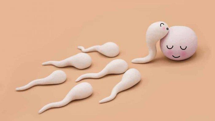 Berapa Kecepatan Sperma saat Dikeluarkan di Dalam Air?