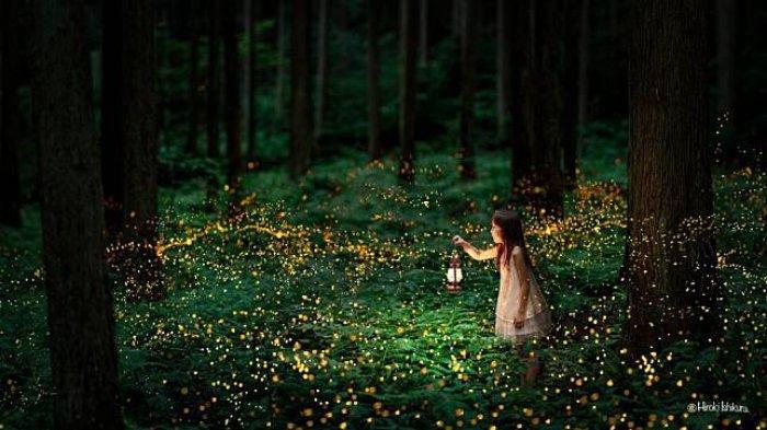 Karena Pestisida dan Lampu, Mahluk Bercahaya Ini Terancam Punah
