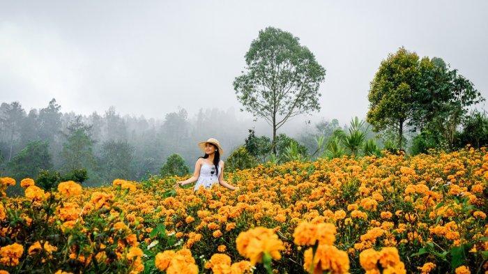 Perubahan Iklim Membuat Bunga-bunga di Dunia Berubah Warna