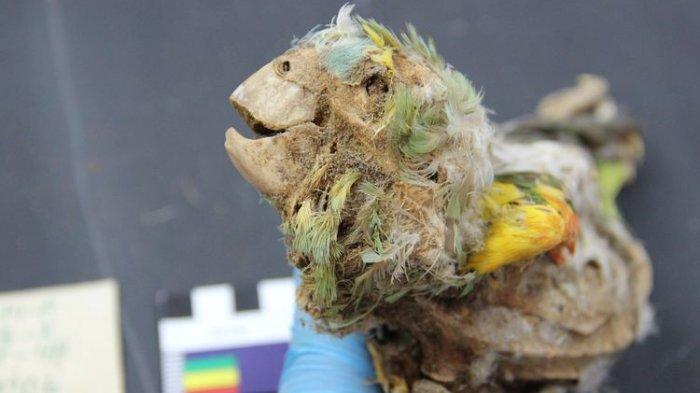 Jutaan Burung Dijadikan Mumi, Bagaimana Orang Mesir Kuno Melakukannya?