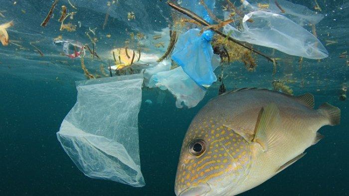 Waspada, Polusi Plastik Mungkin Ada Dalam Makanan Anda