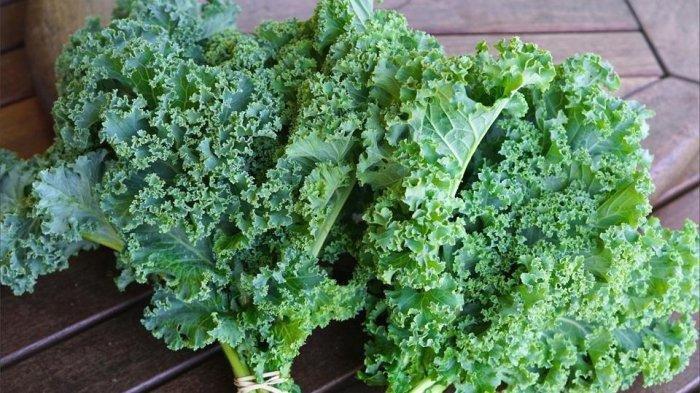 Mirip, Ini Perbedaan Sayur Kale dengan Selada