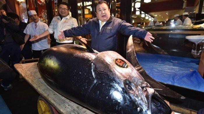 Mengapa Harga Tuna Bluefin Sangat Mahal?