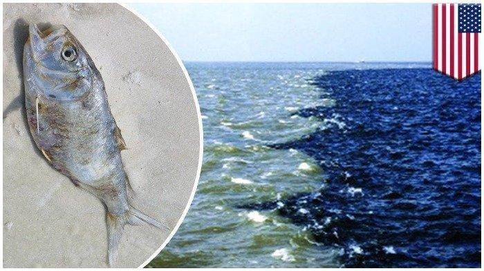 Apa Itu Zona Mati? Pertama Kali Terlihat di Teluk Meksiko dan Semakin Meluas