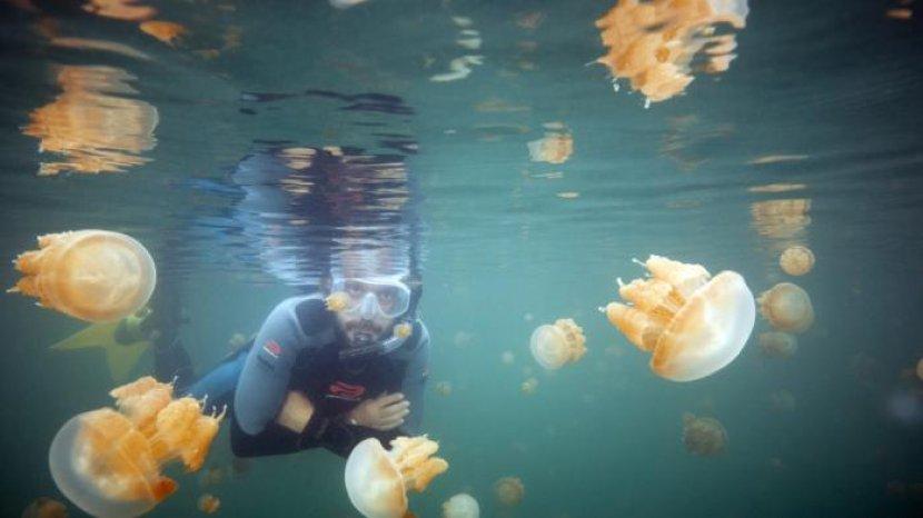 Keunikan Danau Kakaban, Tempat Ubur-ubur Berevolusi