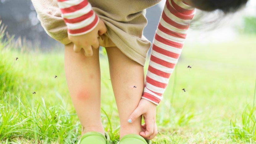 Tips Mencegah Penyakit Demam Berdarah Dengue di Rumah