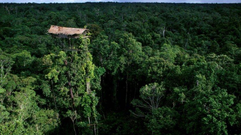 Rumah Adat Suku Korowai-Papua, di Atas Pohon Setinggi 50 Meter