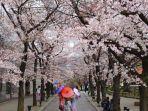 bunga-sakura-2.jpg