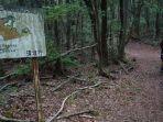 hutan-aokigahara.jpg