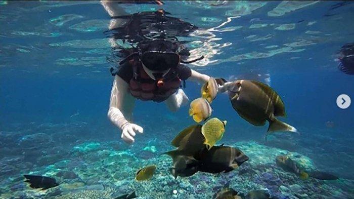 Spot Diving di Bali, PantaiLovina, Pantai Tulamben, dan Pantai Amed