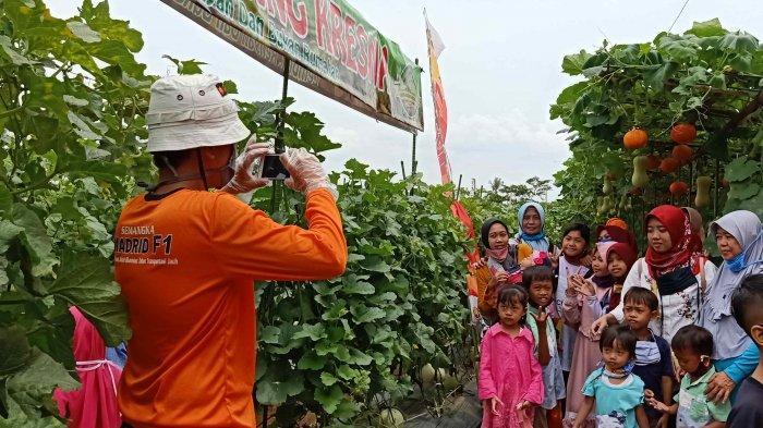 Kebun Agrowisata Baru di Universitas Lampung, Ramai Diserbu Wisatawan