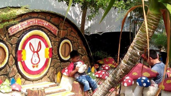 Rumah Strawberry dan Taman Kelinci Bandar Lampung, Bisa Kasih Makan hingga Bawa Pulang Kelinci
