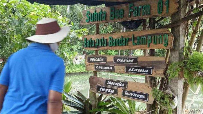 Menikmati Suasana di Suhita Bee Farm Peternakan Lebah di Bandar Lampung