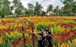 Taman Bunga Celosia Umbul Helau, Ekspansi dari Taman Strawberry dan Rumah Kelinci