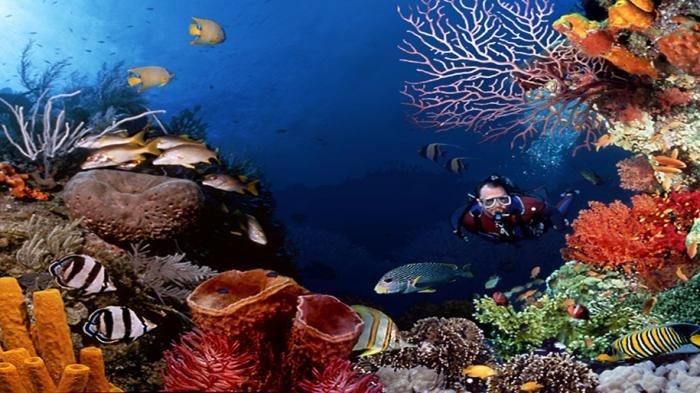 Ini 8 Spot Selam Terbaik di Bunaken yang Menyimpan Sejuta Pesona Keindahan Bawah Laut