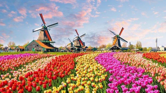 Kebun Bunga Tulip di Belanda Disulap hingga Bertuliskan Pesan Haru